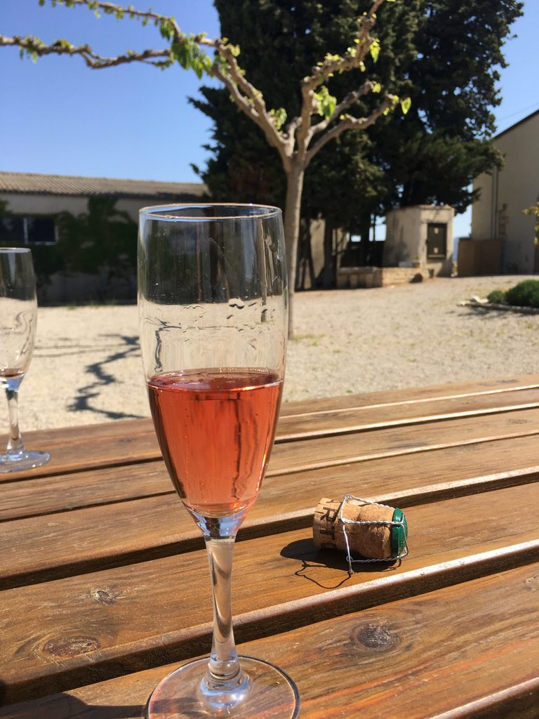 Capturing the moment of drinking cava in Spain at the winery.