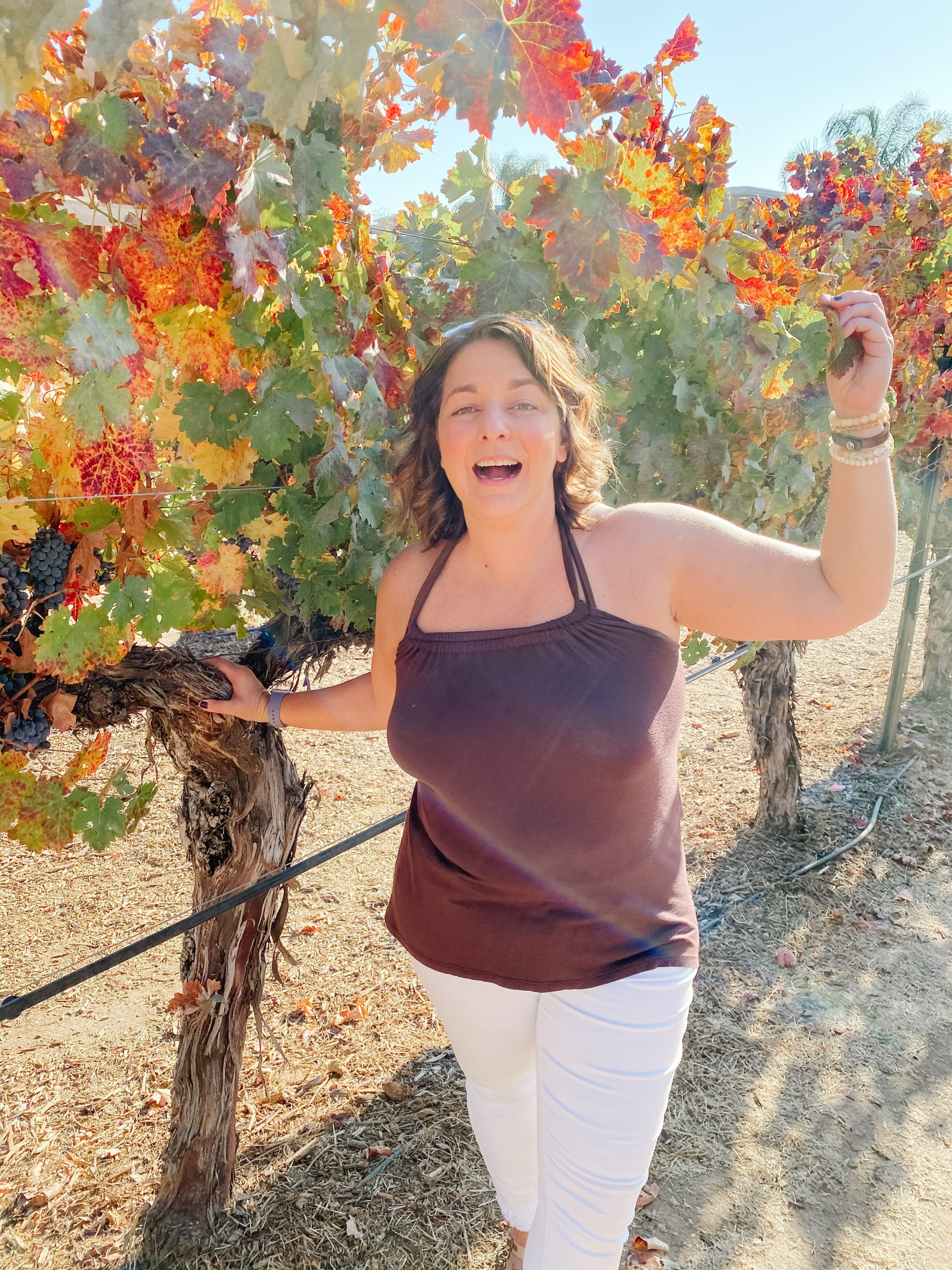 The Bubbly Side of Life in the Wilson Creek Winery vineyards