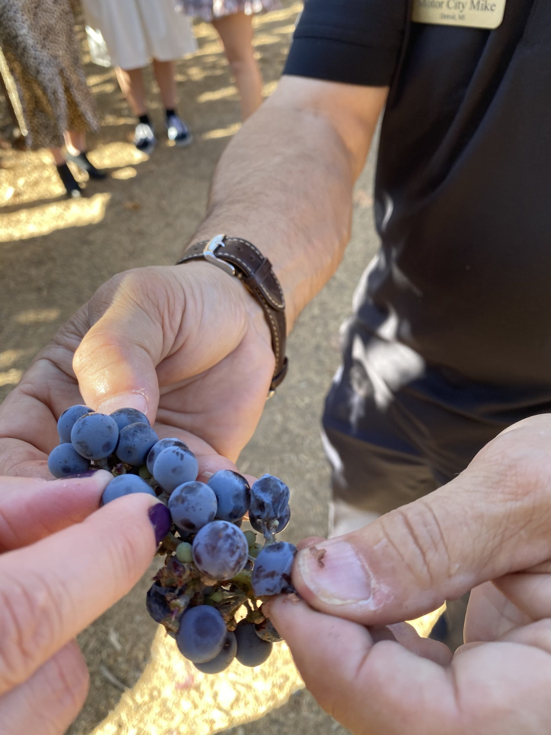 Grapes from the Wilson Creek Winery