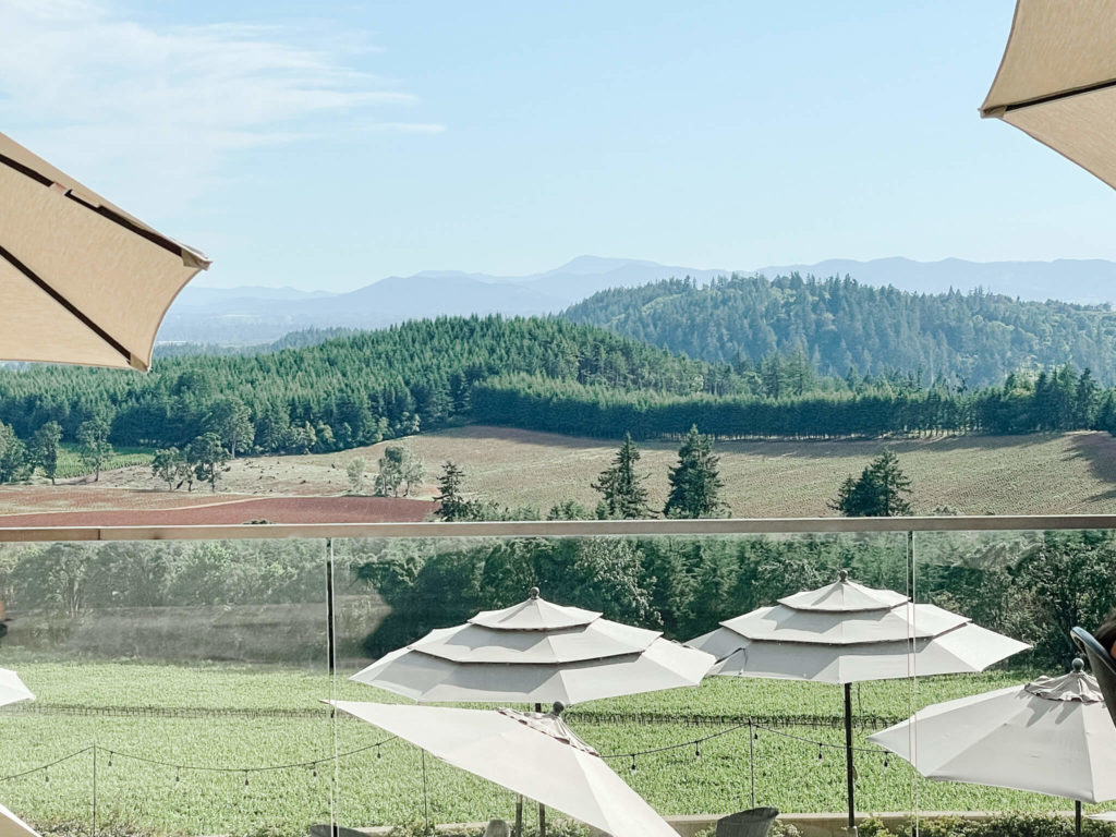 The views from Willamette Valley Vineyards