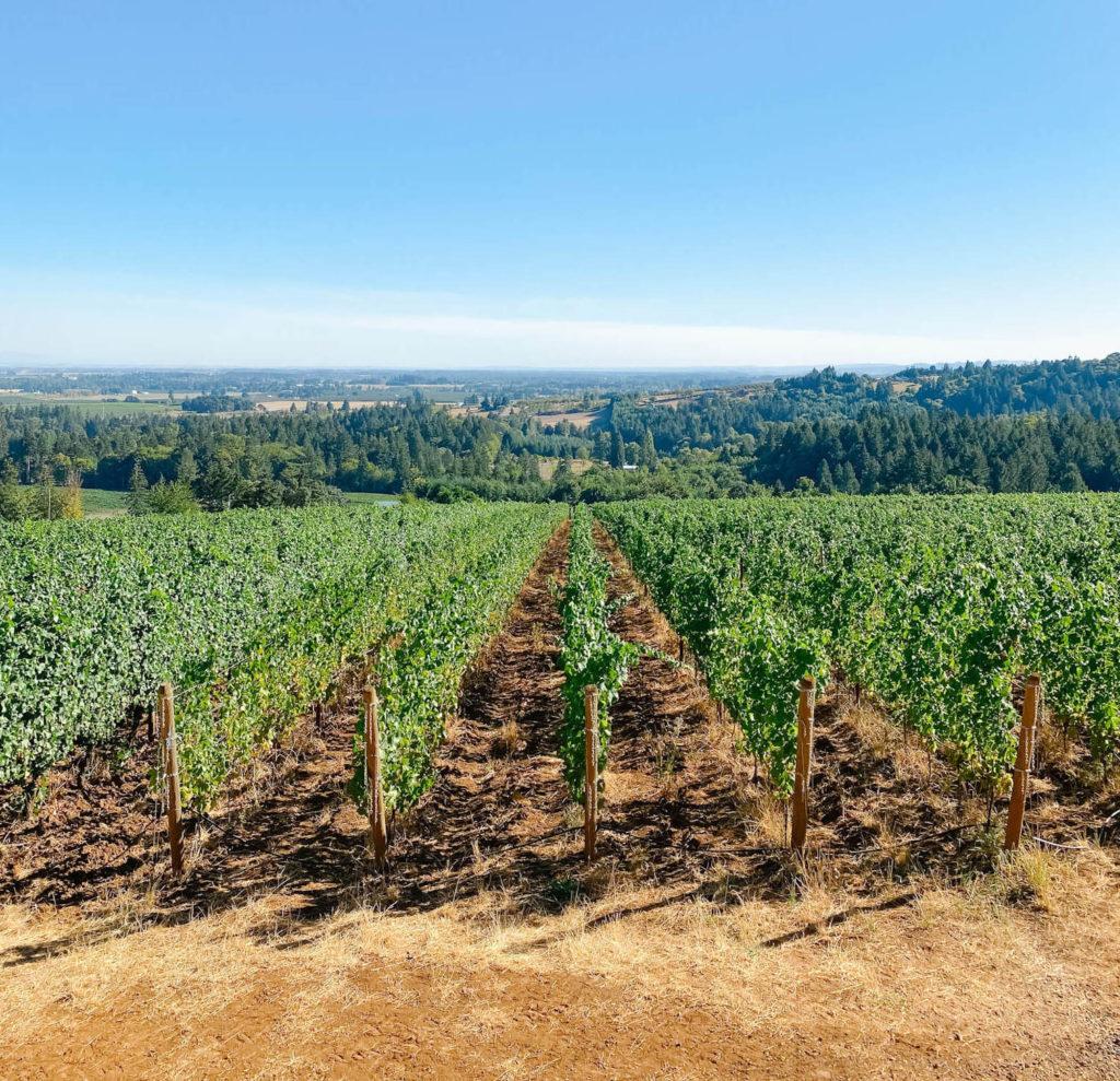Views from Furioso Vineyards in Willamette Valley